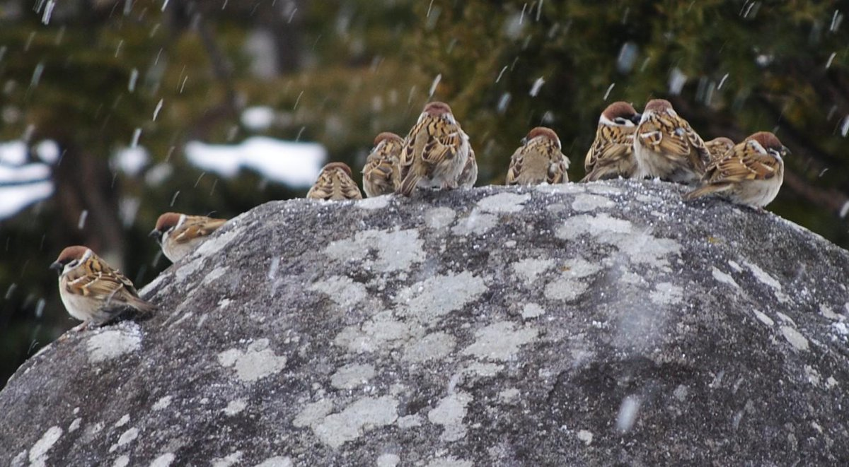 冬の諏訪だとこれがわりとかわいい http://t.co/MxWi6WyD41