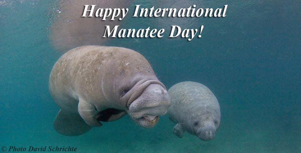 Happy International Manatee Day! (:3) #savethemanatee http://t.co/UdaVXpw0IY