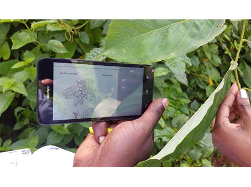 New app 4 identifying+selecting the right tree launched today! Try it. http://t.co/kLUCvjFJAN  #Forests2015 http://t.co/mPq4EG7lpw