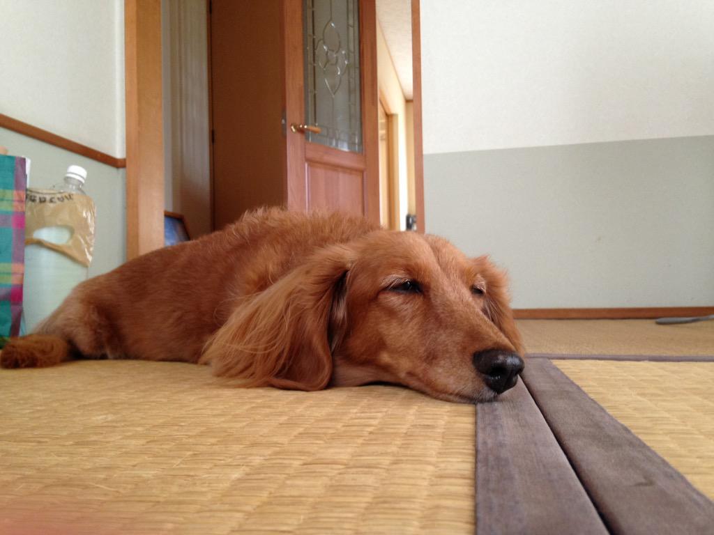 おばあちゃん疲れちゃった http://t.co/TLOjfvKnoq