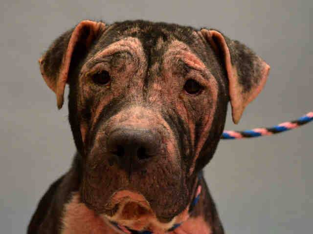 Not many shares! CASHMERE Urgent  Manhattan #NY Dumped because owner has a personal problem https://t.co/0sTXrRK2b2 http://t.co/57wU4IAjyM