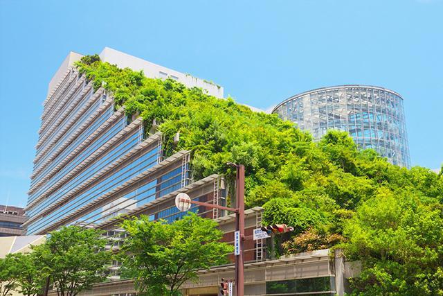 Trapsgewijs komt er steeds meer #groen op onze daken, mooi #duurzaam voorbeeld om te volgen.. @DeGroeneStad @GMJD030 http://t.co/knygnupnif