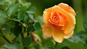 Feliz viernes #color naranja lleno de sensualidad y creatividad! @ElColorComunica via @PatyGallardo http://t.co/QKRo29VO84