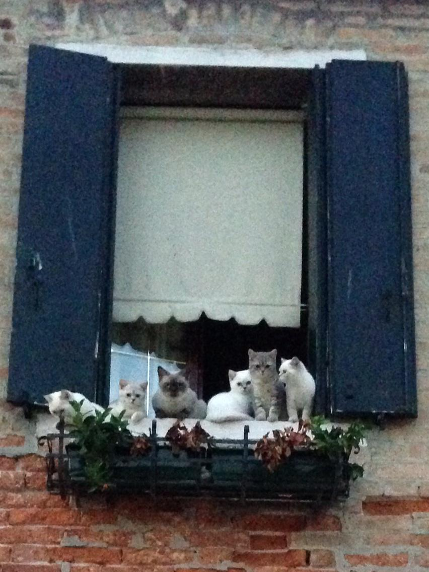 Six kittens in a window in Venice. No, seriously. http://t.co/Omo4CWkqtt