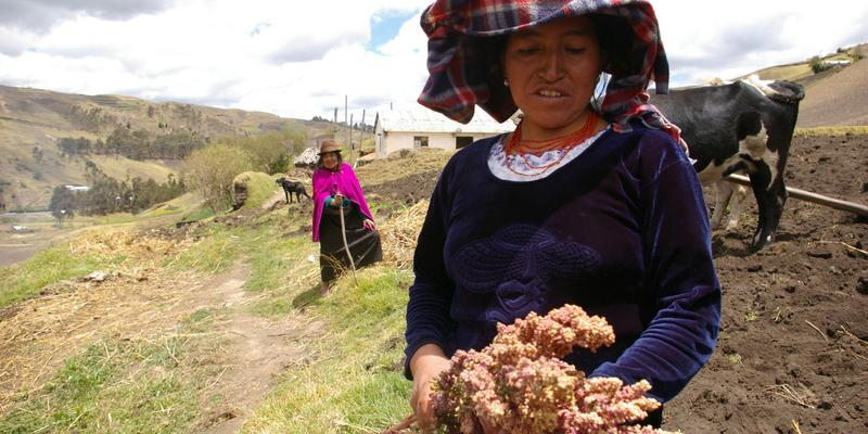 CCRP grantee @RootCapital helps improve livelihoods for smallholder quinoa growers in Bolivia: http://t.co/gQznT6qwzC http://t.co/cjQBsydIGq