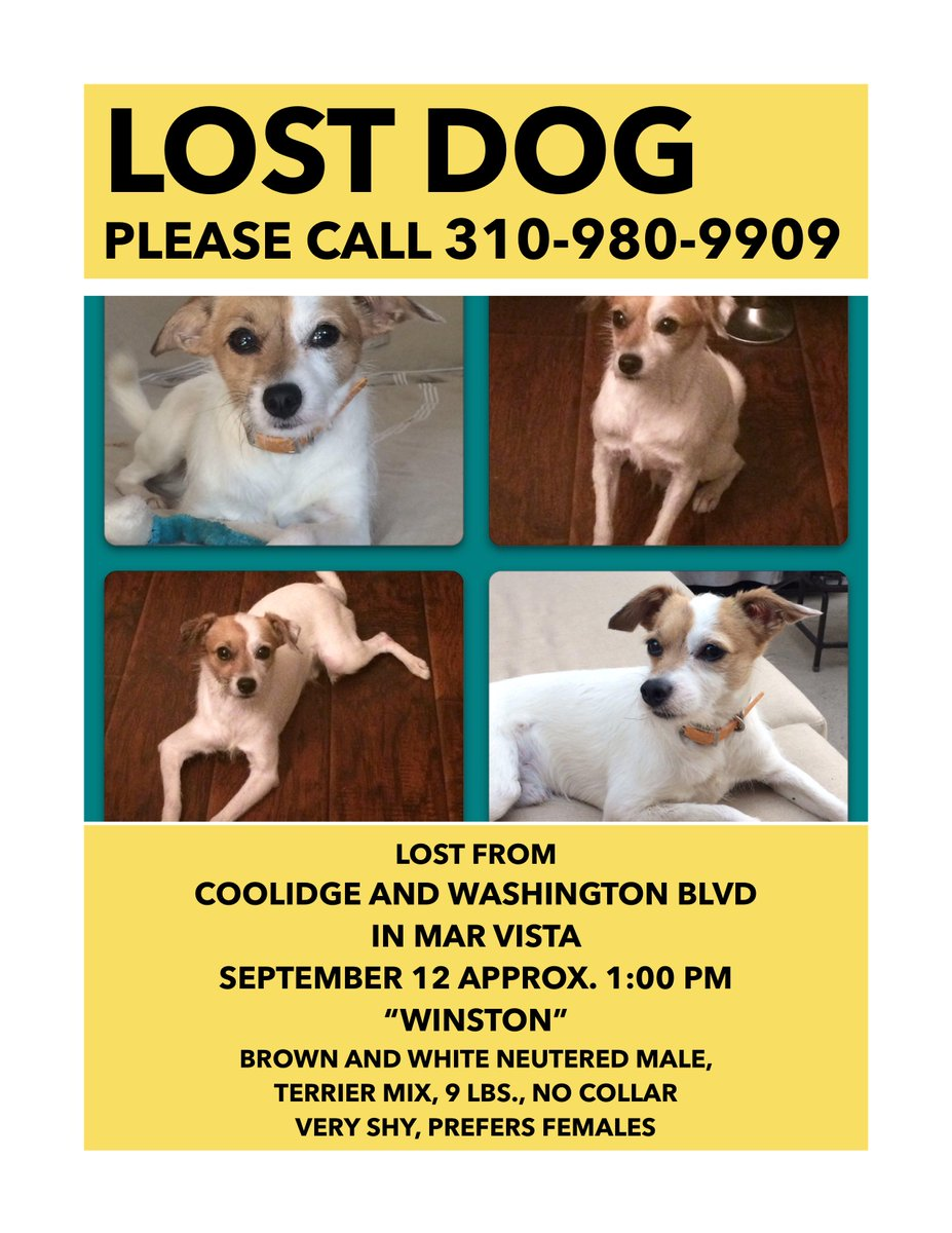 URGENT!!! Please RT and help find Winston! http://t.co/RARY8Pl2ap