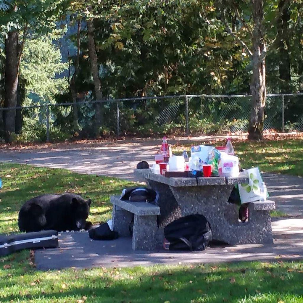 A bear raided our picnic table today in Burnaby Mountain Park #sfu #Burnaby #vancouver #canada http://t.co/aC1afs2TrL