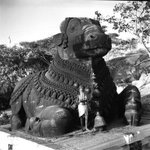 1950s ::  Nandi Bull at  Chamundeshwari Temple, Mysore , Built in 12th Century By Rulers of Hoysala Dynasty https://t.co/OOfqCsFtMS