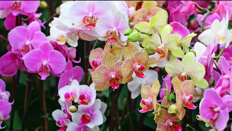fun fact new york is home to  species of wild orchids. they're, Beautiful flower