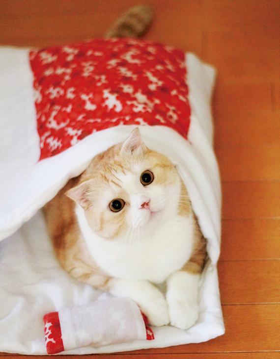 「猫のお布団」販売開始! かわいい猫の寝顔が見られる、猫専用の和布団です。猫が入りやすい工夫つき。⇒(http://t.co/8QHr1xRut3) http://t.co/4OPbD4YC9O