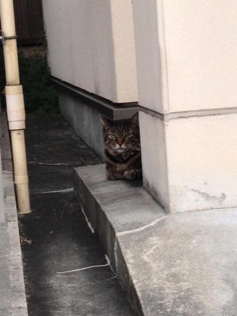 一期一猫。 http://t.co/voy3r0Ayg6