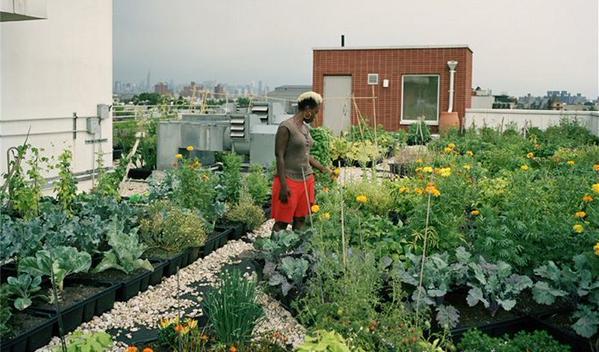 Geen tuin, en u wilt toch verse #groenten kweken? Dan kunt u het dak op... @supersnelgezond #stadslandbouw http://t.co/Qx9k27fUcM