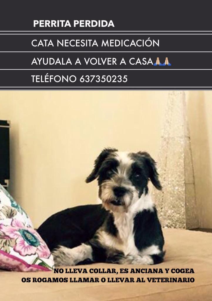 Mi querida amiga @MariaEsteveF  necesita encontrar a su perrita,está perdida por el Rincón de la Victoria ( Málaga) http://t.co/Vs3IjPVmcU
