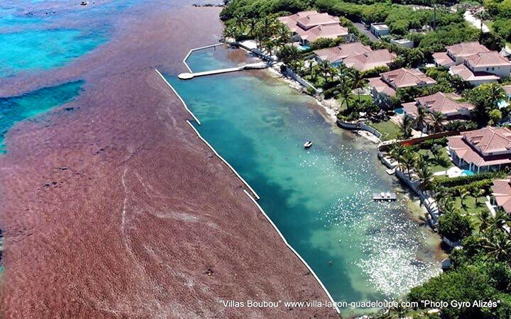 Le barrage anti-sargasses des villas boubou en #Guadeloupe, est un succès ! http://t.co/TSpI3lvtEt