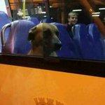 eu qnd to no ônibus mas esqueci o fone de ouvido em casa https://t.co/gAIEeAexwV