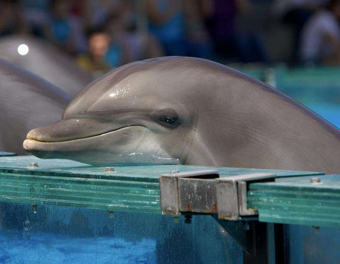 RT @CoveGuardians: 5th straight BLUE COVE DAY! please don't forget the 100's of captive dolphins imprisoned worldwide. 9:33am #OpHenkaku ht…