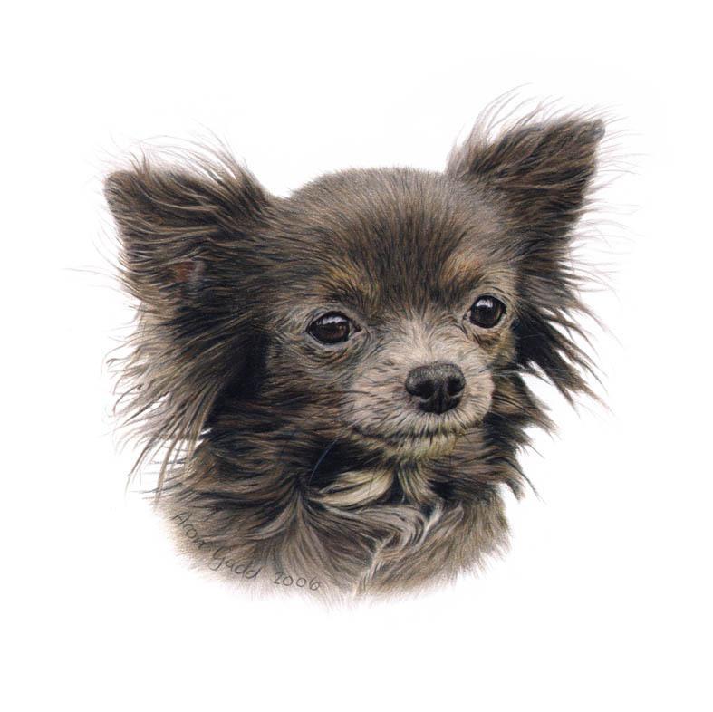 AKC Rescue Network - American Kennel Club