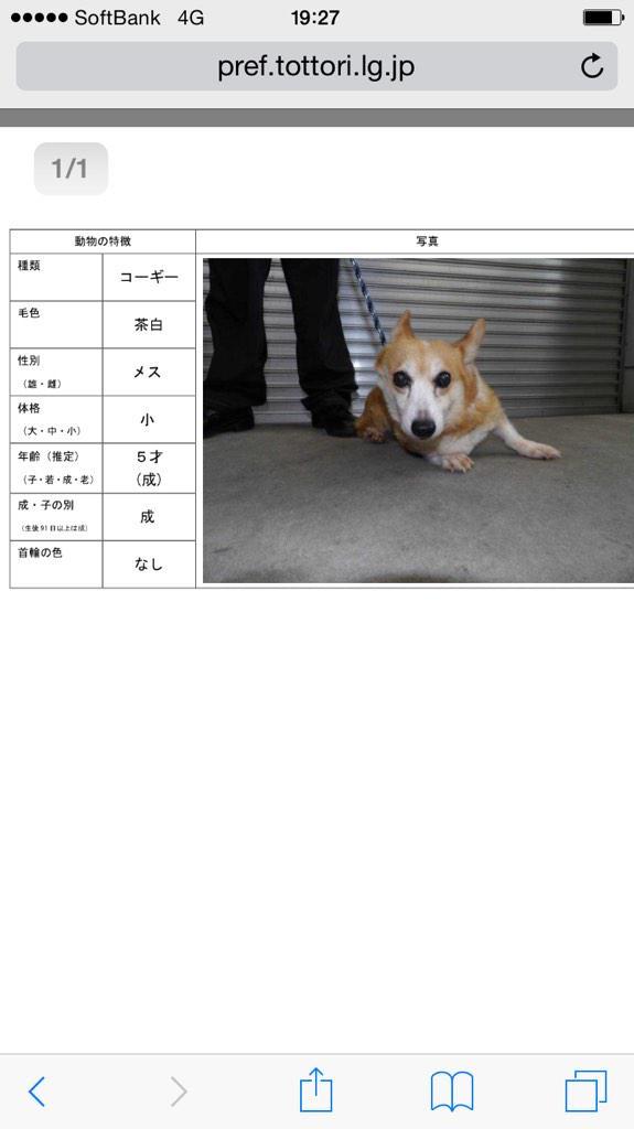 【#鳥取県 西部】9/17 #米子市 西福原にて保護。 コーギー ♀5歳 茶白 小 首輪なし。  ※9/20公示期限 飼い主様のお迎えを待っていますよ! #迷い犬 #犬 #保健所 #拡散 http://t.co/Y9ejAov7ym