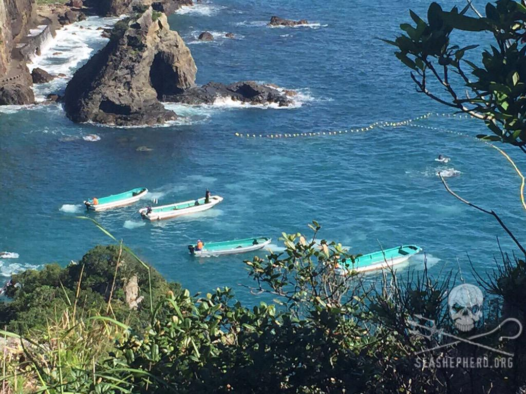 RT @CoveGuardians: Captivity selection continues. 14 so far, still 25-35 waiting for their fate. #tweet4taiji #OpHenkaku http://t.co/pMlQJB…