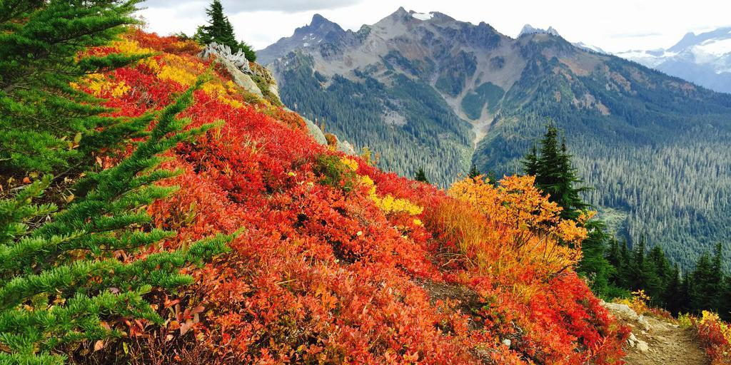 Trip reporter jumpsinwaterguy recently witnessed some incredible fall colors: http://t.co/lVfj54X3E6 http://t.co/FViGdkCUyl
