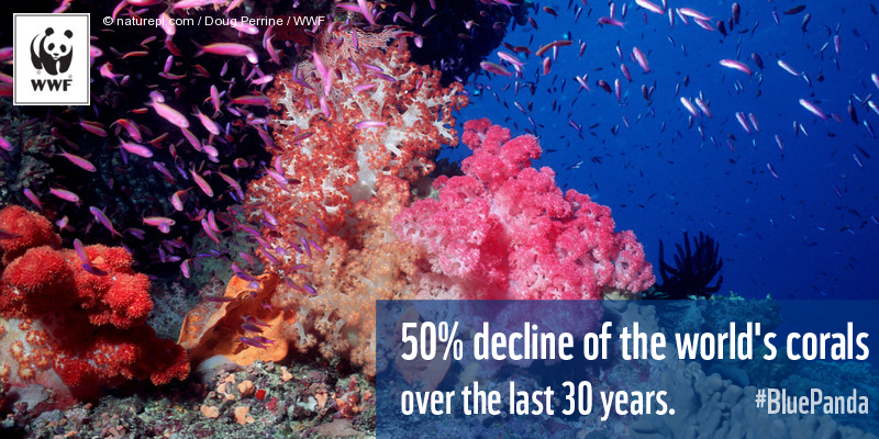 50% of the world's corals have disappeared over the last 30 years. RT to raise awareness. #BluePanda http://t.co/Ji6AmjdFiy