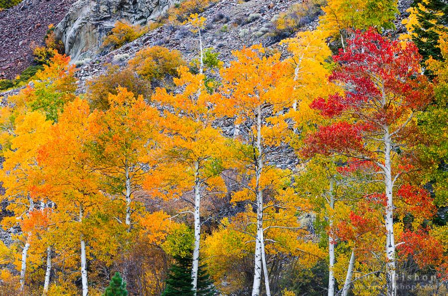 Fall Color Tip - Where's The Light? http://t.co/dzGJufqcV7 #photography #fallcolor #creativity http://t.co/4XEb297mFs