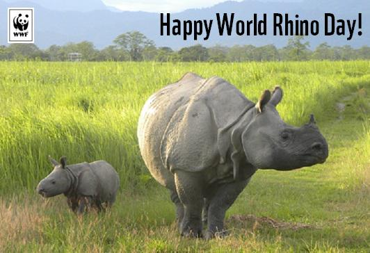 It's #WorldRhinoDay today! And here's some good news for #India's rhinos: http://t.co/0qf3kohTaC http://t.co/nJLXFure8u
