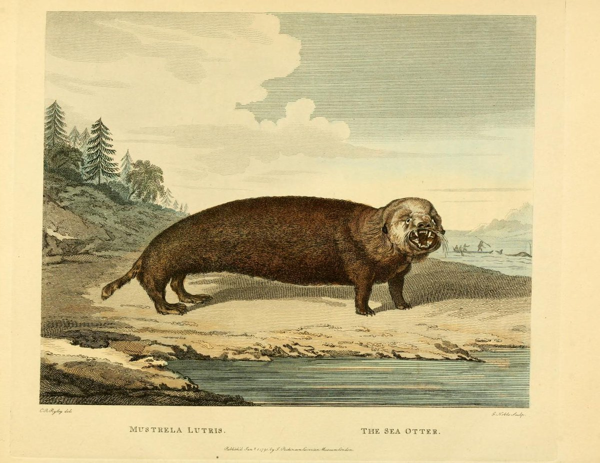 Obviously not all scientific illustrators were #otter fans... via @BioDivLibrary http://t.co/hT5QGVKxCR #SOAW http://t.co/LYMCRi60sK