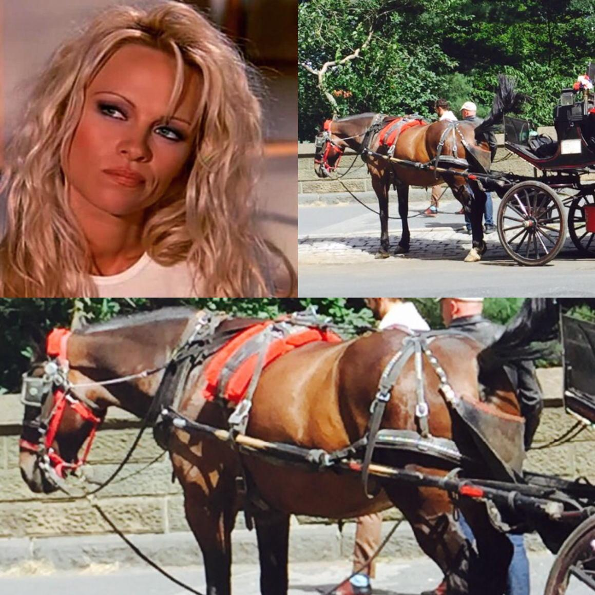 LOVE #NYC, HATE #horsecarriage cruelty! What's the plan to #BanHorseCarriages @deBlasioNYC?! http://t.co/0ke683NBFp