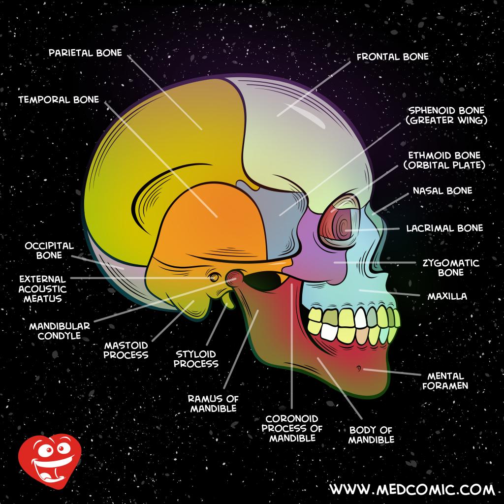 Forensic Neuropathology - Cover