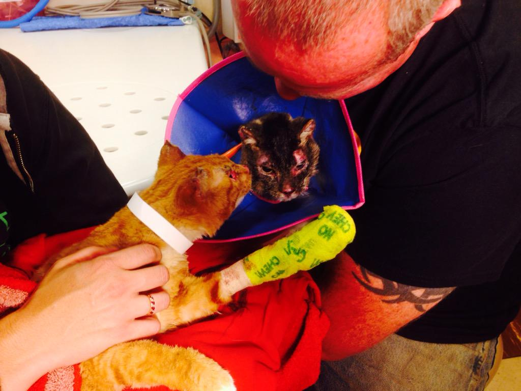 Sibling cats, lost separately in #ValleyFire, reunited with each other and family at UC Davis veterinary hospital. http://t.co/uprPICfVIx