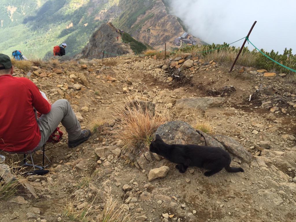 赤岳(標高2889m)山頂付近に住み着いた黒猫がいるらしい 越冬できるの?との声も