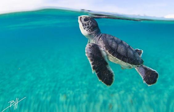 No será el #FinDelMundo pero las tortugas marinas siguen en peligro de extinción. ¡Dona y difunde el #Tortugatón! http://t.co/0cKgk3rW5v