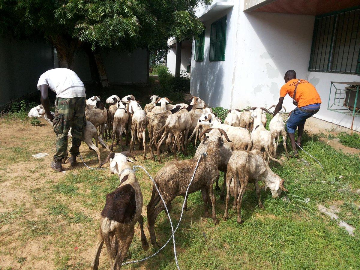 Remise de 32 moutons pour 32 parents d enfants malade par @sunucause à albert royer #Sunutabaski #kebetu http://t.co/newWkNCwZ2