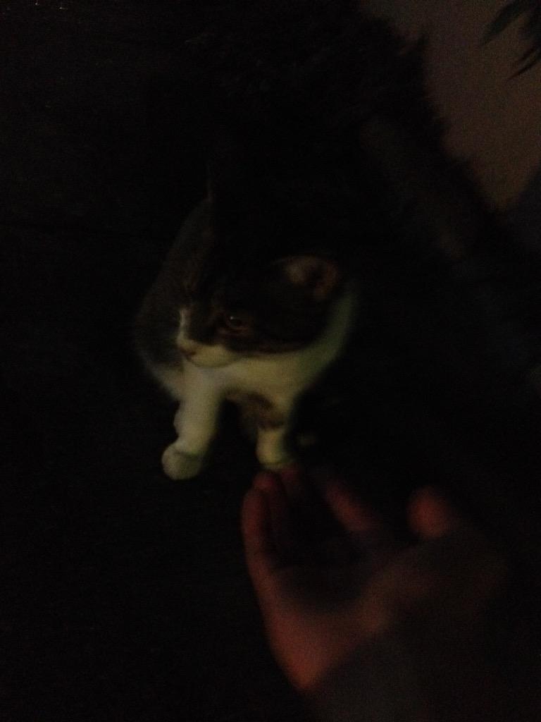 そう言えば、昨晩ようやくご近所の猫を手なずけた。かわいいのぅ。シロクロ(勝手に命名) http://t.co/YTQUlnTzQ2