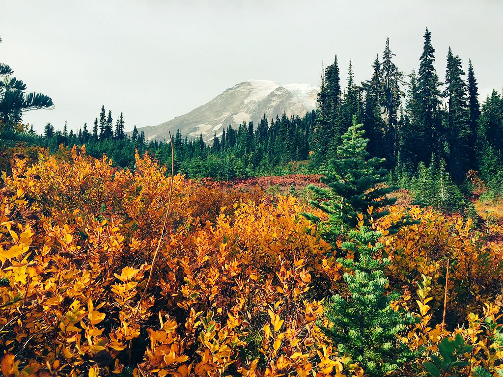 Beautiful fall colors at @MountRainierNPS  #PNW #FindYourPark http://t.co/Q4ykkzCqR7