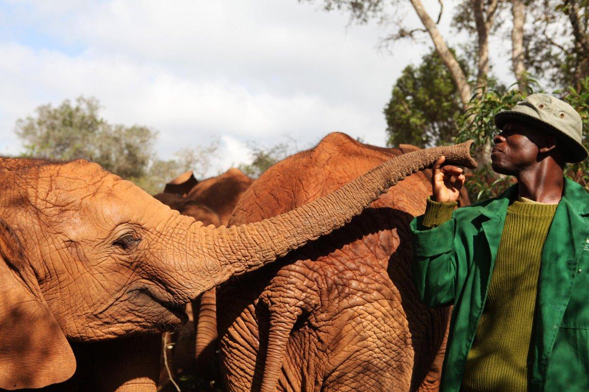 Help raise critical funds for orphaned elephants at @DSWT's Gala Dinner on 25 Sept http://t.co/8c2l8LKuBv http://t.co/9ljpRr5Uqh