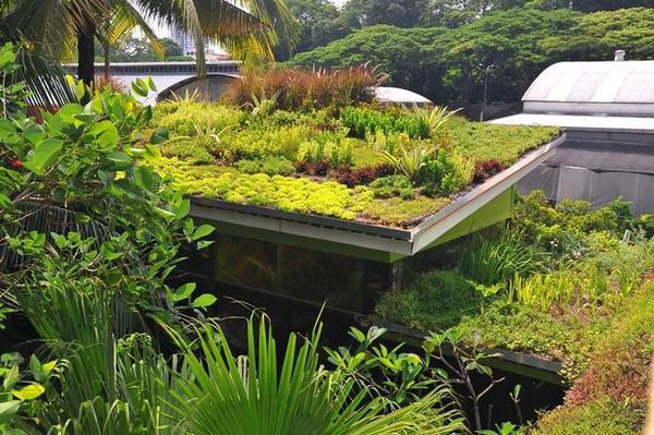 Verbeter de wereld, begin bij jezelf en meer #groenedaken bij de #buren volgen vanzelf.. @DuurzameBuren @BuurtKracht http://t.co/MnETRGJRwV