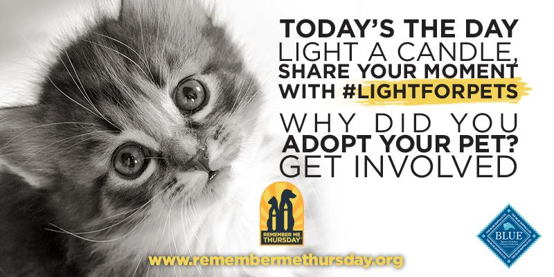 Remember Me Thursday - for all the pets waiting in shelters for a home & those who never made it out. #lightforpets. http://t.co/ZpxgWFNLUh