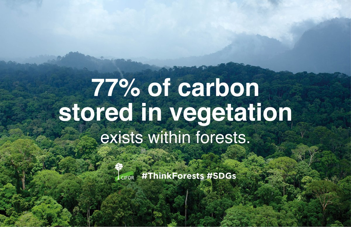 Did you know? To achieve the #SDGs, forests are one of our best allies: http://t.co/BF46jVug93 #ThinkForests http://t.co/kEn93y8w8D