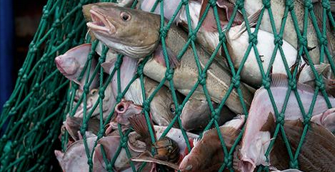 RT @Fish_Feel: #Fish don't want to die. They are scared in their last moments of life, & desperately fight for their lives. #GoVegan http:/…