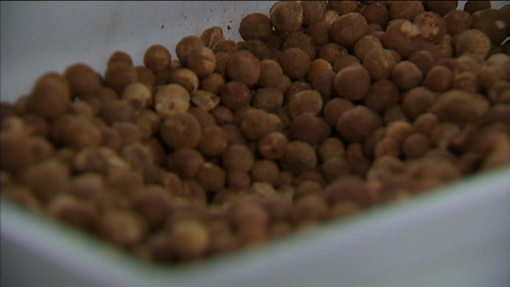 #Sandalwood's worth $10K a tonne!  WA growers are now selling nuts too - tastes 'a bit like popcorn' @abclandline http://t.co/c98zeMVYI5