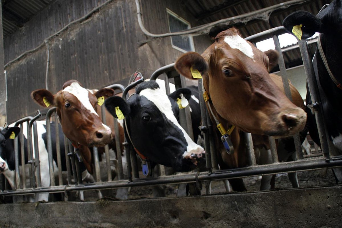 RT @LC4A: Animals are not INVENTORY. #dropdairy #meatismurder http://t.co/y83pXVkeck