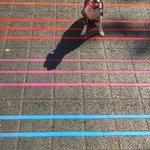 Lucys loving the new crosswalks in midtown. #Sacramento http://t.co/iRxTBZoP9t