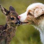 Los perros no son peligrosos por su raza. La educación y el cariño que les des determinarán su futura conducta http://t.co/wC3FdSqDBa