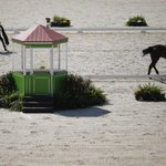 Rio Olympic equestrian may be moved outside Brazil http://t.co/hqk9869810