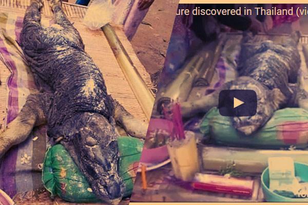Netizen Heboh Kelahiran Kerbau Mirip Buaya di #Thailand http://t.co/sP6K20ZgDB @RichardBarrow @thailand http://t.co/3PcY6BUxfk