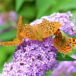 The butterflies have got that #FridayFeeling, have you?! http://t.co/QBb4s6vUTp