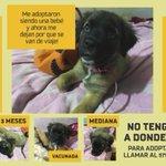 @PoliciaChevere Pls help, esta hermosa perrita busca hogar urgente solo tiene un dia!! http://t.co/fgfzdtv9aP Gracias!! #Adopta