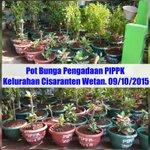 #BandungJuara #PIPPK2015 Pengadaan Tanaman @wawankaryawan08 @tinakurniasih1 @DiskominfoBdg Yth Bpk @ridwankamil http://t.co/klw3LODujA